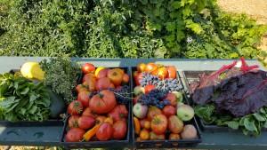 Garden_harvest